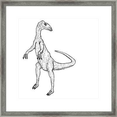 Coelophysis - Dinosaur Framed Print by Karl Addison