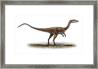 Coelophysis Bauri, A Prehistoric Era Framed Print by Sergey Krasovskiy