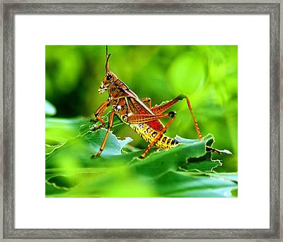 Col. Wilspit Framed Print by LC  Linda Scott