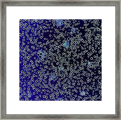 Cola Bubbles, Negative Image Framed Print by Kevin Curtis