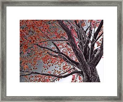 Cold Autumn Framed Print