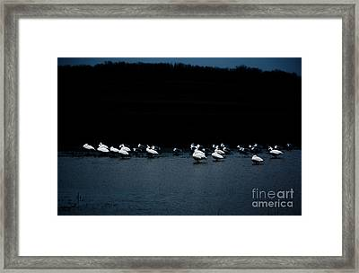 Cold Duck Framed Print by Lisa Holmgreen