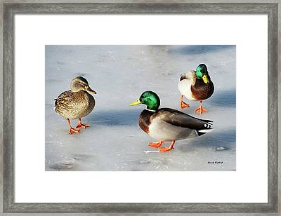 Framed Print featuring the photograph Cold Ducks by Stephen  Johnson