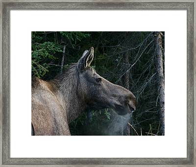 Framed Print featuring the photograph Cold Morning by Doug Lloyd