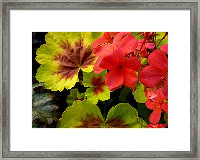 Framed Print featuring the photograph Coleus And Impatiens Blooms by Cindy Wright
