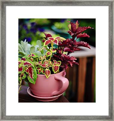 Coleus Collection Framed Print by Michael Putnam