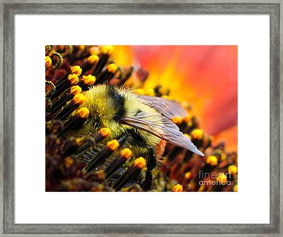 Collecting Pollen Framed Print