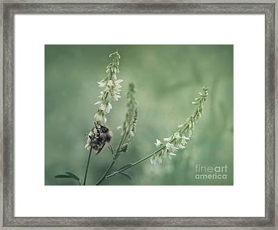 Collecting The Summer Framed Print by Priska Wettstein