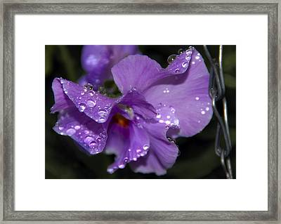 Collection Of Water Drops Framed Print by Svetlana Sewell