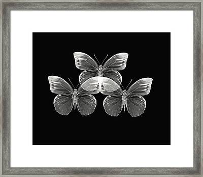 Collection2 Framed Print by Lourry Legarde