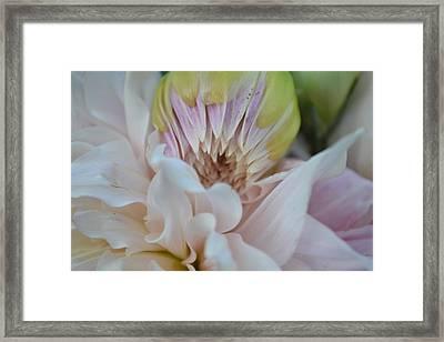 Colliding Beauty Framed Print by Naomi Berhane