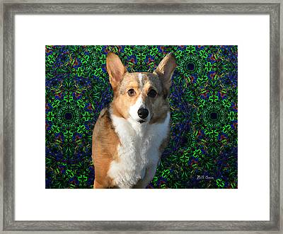 Collie Framed Print by Bill Cannon