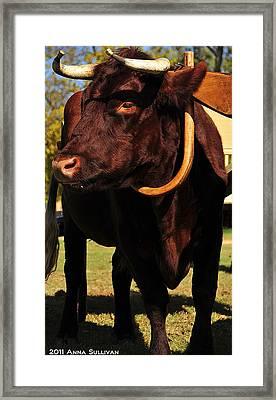Colonial Williamsburg Ox  Framed Print by Anna Sullivan