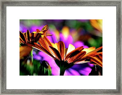 Color And Light Framed Print
