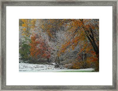 Color Caught In The Snow Framed Print