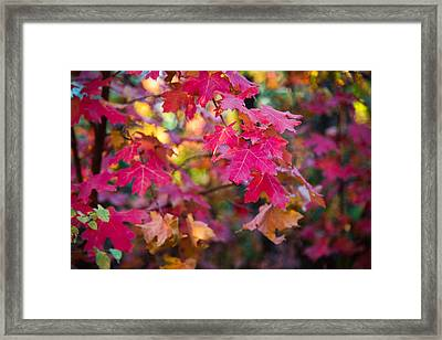 Color Framed Print by Chad Dutson
