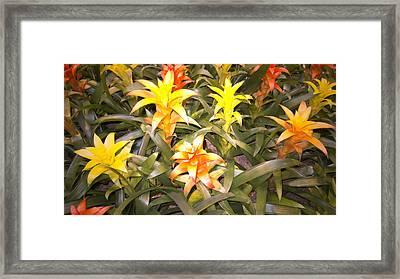 Color Display Framed Print