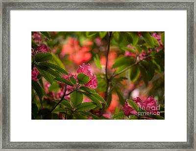 Color In The Jungle Framed Print by Mike Reid