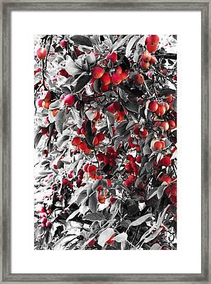 Color Of Apples Framed Print by Matt Lewis
