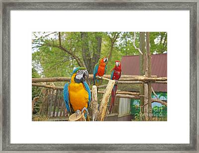 Color Of Parrots  Framed Print