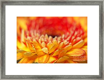 Color Of Summer II Framed Print by Angela Doelling AD DESIGN Photo and PhotoArt