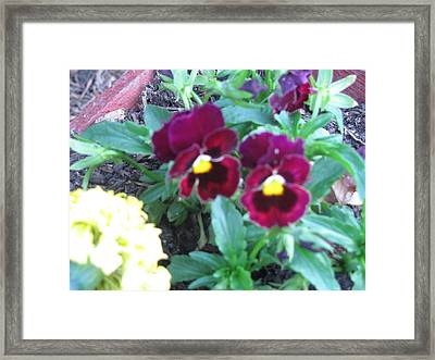 Color Of Wine Framed Print by Amy Bradley