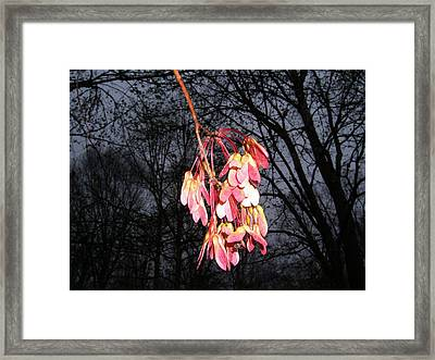 Framed Print featuring the photograph Color On A Gloomy Day by George Bostian
