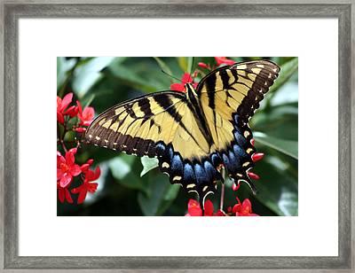 Color Wheel Framed Print by LC  Linda Scott