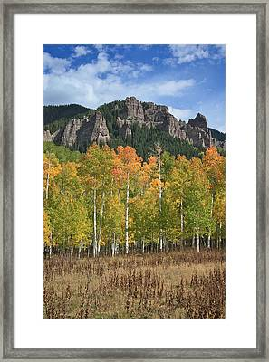 Colorado Aspens In Fall Framed Print