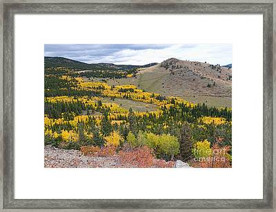 Colorado Autumn Aspens Colors Framed Print by James BO  Insogna