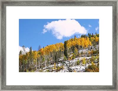 Colorado Autumn Framed Print by Sharon I Williams