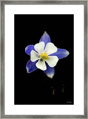 Colorado Columbine Framed Print by Darryl Gallegos