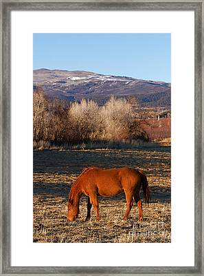 Colorado Horse Ranch At Sunset Near The Rocky Mountains Framed Print by ELITE IMAGE photography By Chad McDermott