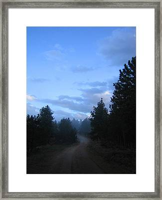 Colorado Pine Forest In Mist Framed Print by Ric Soulen