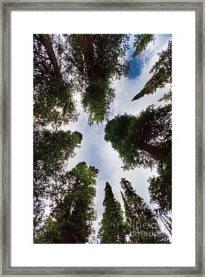 Colorado Rocky Mountain Forest Sky Framed Print by James BO  Insogna