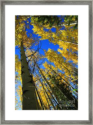 Colorado Sun Framed Print