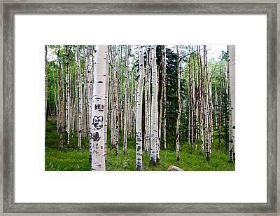 Colorado Trees Framed Print by Snow  White