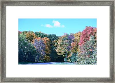 Colored Trees Framed Print by Dyana Rzentkowski