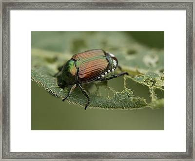 Colorful Armor Framed Print by Dean Bennett