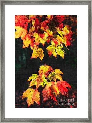 Colorful Autumn Leaves IIi Framed Print by Dan Carmichael