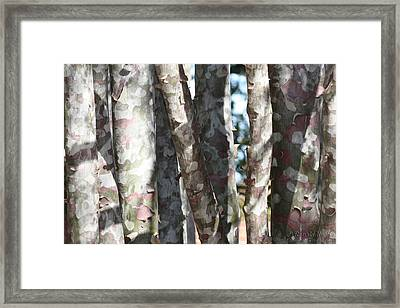 Colorful Bark Framed Print
