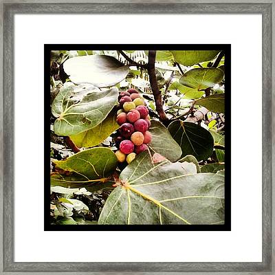 Colorful Beauty Framed Print by Chasity Johnson