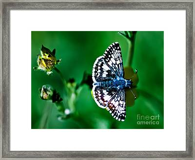 Colorful Butterfly Framed Print by Mitch Shindelbower