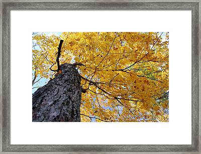 Colorful Canopy 130 Framed Print
