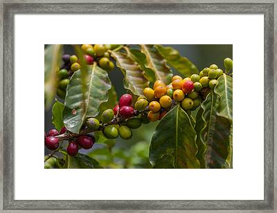 Colorful Coffee Beans Framed Print by Craig Lapsley