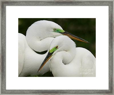 Framed Print featuring the photograph Colorful Couple by Myrna Bradshaw