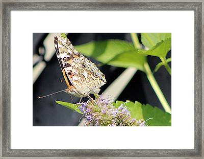 Colorful Critter 1 Framed Print by Frank Nicolato