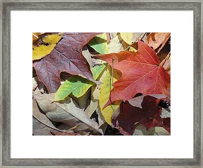 Colorful Fall Leaves Framed Print by Kathy Lyon-Smith