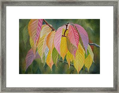 Colorful Fall Leaves Framed Print by Sharon Freeman