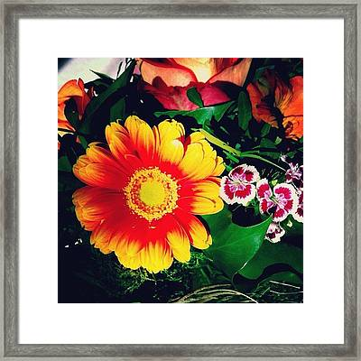 Colorful Flowers Framed Print by Matthias Hauser